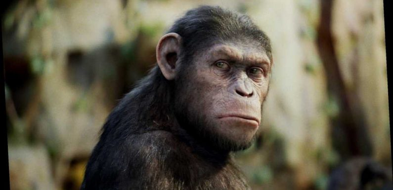 Scientists splice HUMAN genes into monkey brains to make them bigger in terrifying Planet of the Apes-style experiment