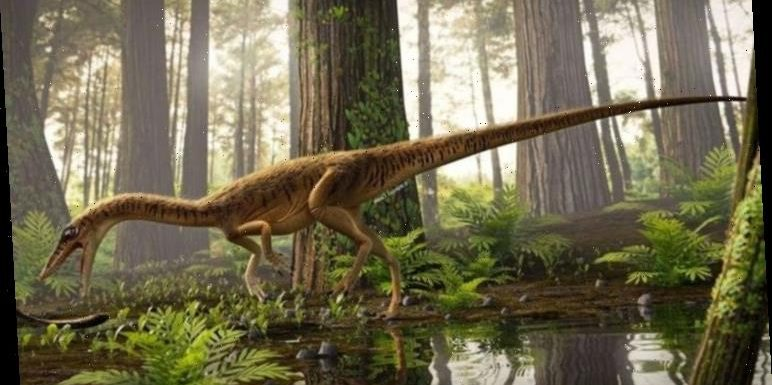 Dinosaur discovery: 'Most primitive' relative of the T Rex discovered in Brazil