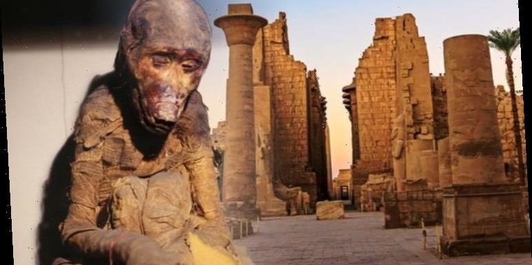 Ancient Egypt: Study of mummified baboons sheds light on location of lost Kingdom of Punt