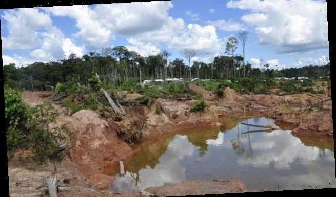 Amazon rainforest will die by 2064, scientist predicts