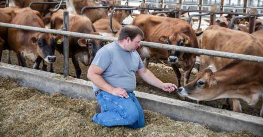 Is Dairy Farming Cruel to Cows?