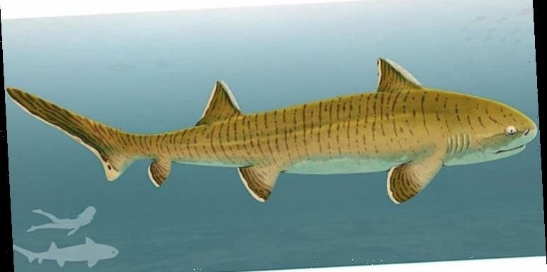 Jurassic shark: Researchers discover evidence of 8FT ancient apex predator