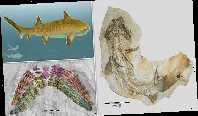 Spectacular fossil of an eight-foot ancient shark found in Germany