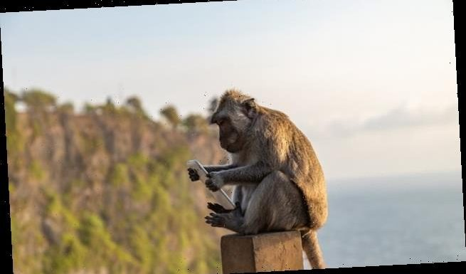 Monkeys in Bali steal valuables from tourists and trade them for food