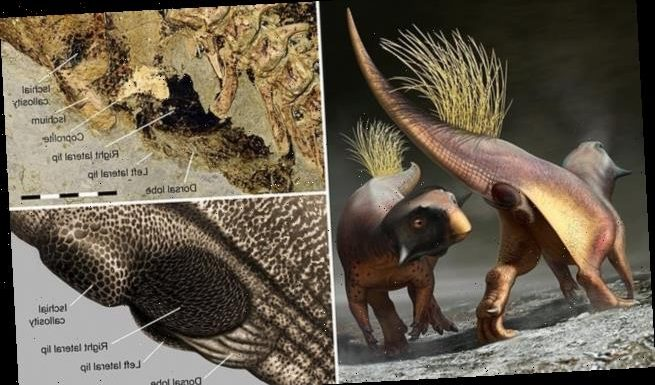 Dinosaur genitals are reconstructed for the first time