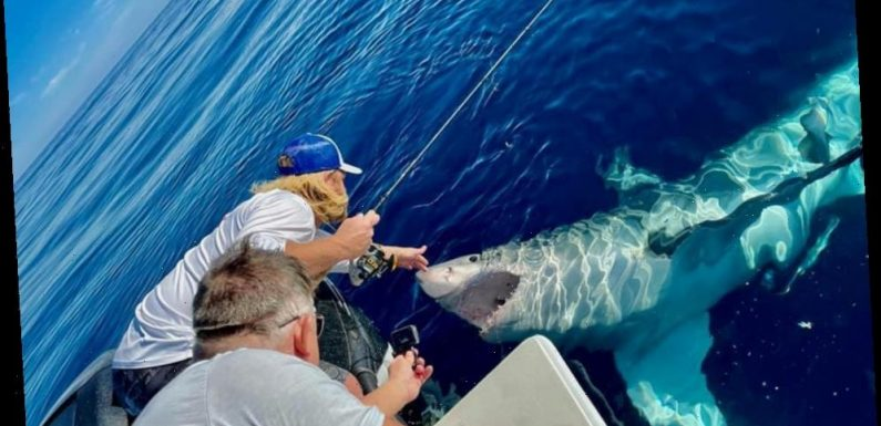 Heart-stopping moment fisherman PETS 16-foot great white shark floating on its back before beast attacks boat
