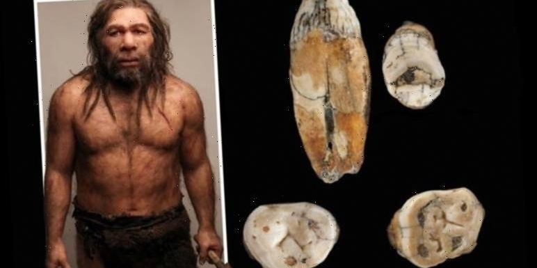 Neanderthals interbred with modern-day humans, new analysis of teeth from Jersey reveals