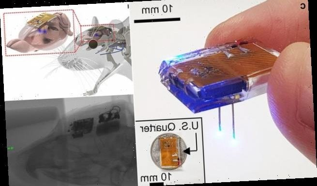 Brain implants the size of a penny combat drug addiction in rats