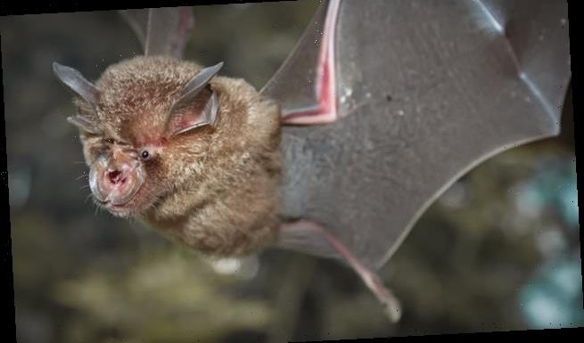 New coronavirus linked to SARS-CoV-2 is discovered in bats in Thailand