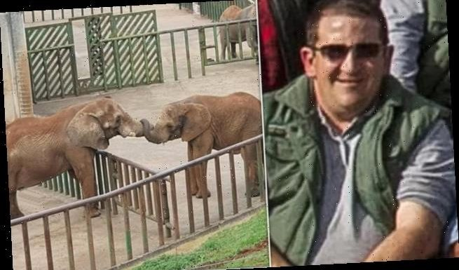 Elephant kills zookeeper by hitting him around the head with its trunk
