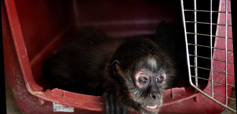 12 primates die at Texas sanctuary in winter storm power outage