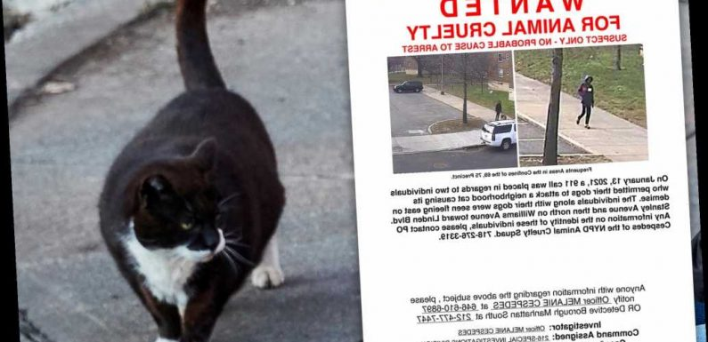 NYPD releases wanted poster for Brooklyn cat killer