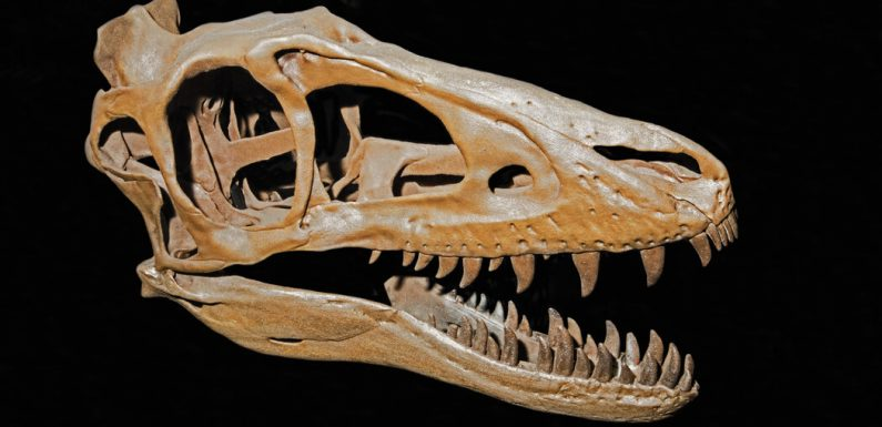 The Outsized Influence of Teen T. Rex and Other Young Dinosaurs