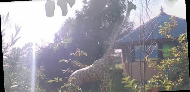 Google Maps users think they spot a giraffe in someone's back garden