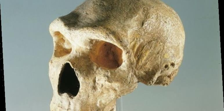 Neanderthals had 'capacity' to understand and speak 'human language', experts find