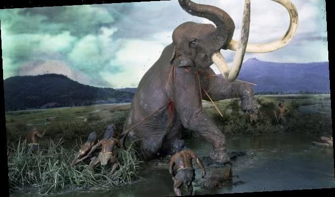 Extinction of larger animals led to the human brain doubling in size