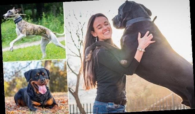 Larger dog breeds are at a higher risk of bone cancer