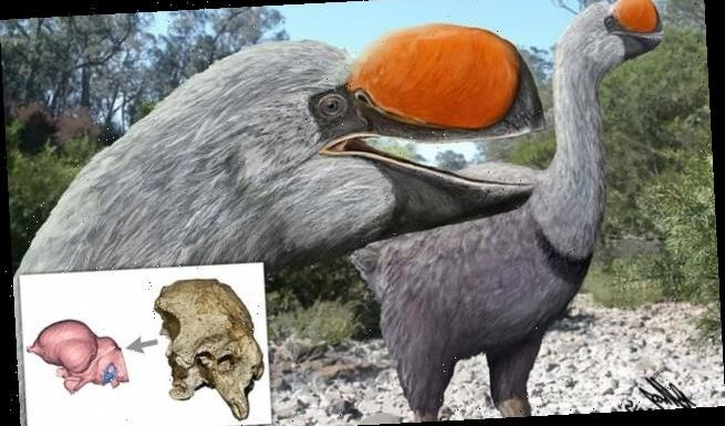 Largest flightless bird lived 50,000 years ago and weighed 1,323lbs