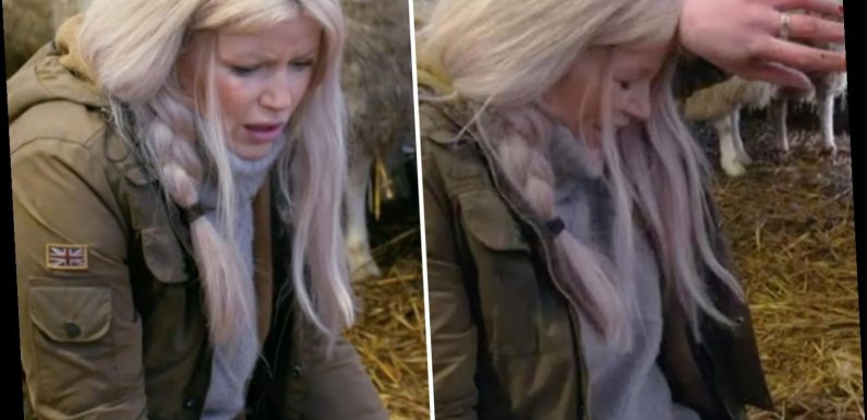 Countryfile's Ellie Harrison fights back tears as Adam Henson saves newborn lamb in 'distressing' BBC scenes
