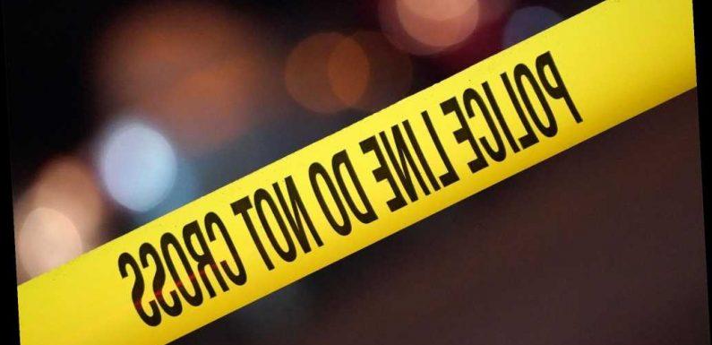 Purr-fect crime! Man awakes to burglar holding gun to head, demanding his cats