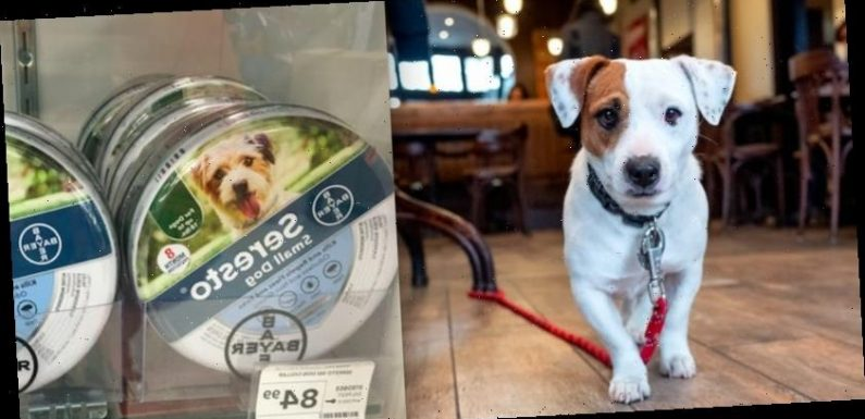 A popular flea collar is linked to nearly 1,700 pet deaths. Now Congress is pushing the company to recall the product.