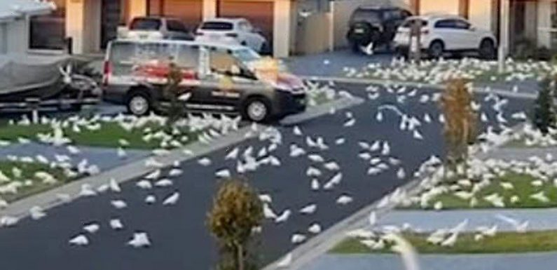 'Birdpocalypse' as thousands of parrots invade town forcing residents indoors