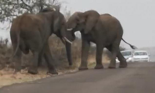 Elephants fight in South African game reserve