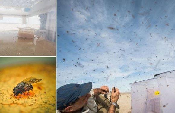 Fruit flies are 'extreme ultramarathon fliers', study reveals