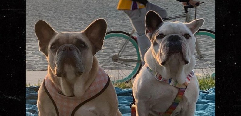 Lady Gaga's Dogs Tied to Pole in Alley, Finder Gets $500k Reward
