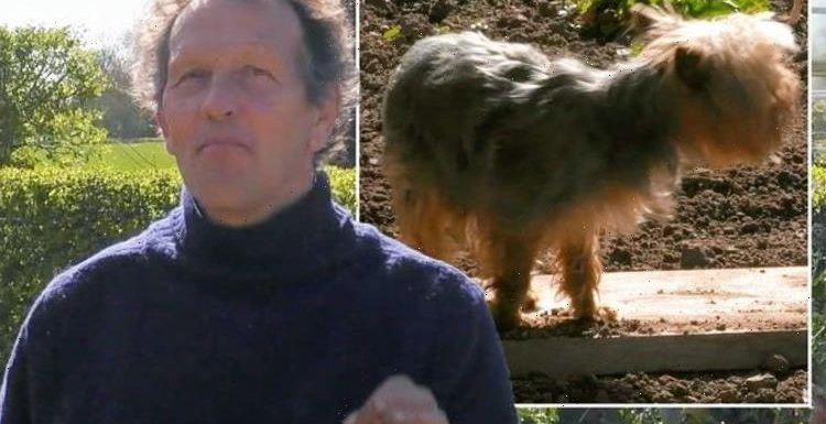 Monty Don Gardeners' World demo derailed by pet terrier Patti: 'Gonna have to move'