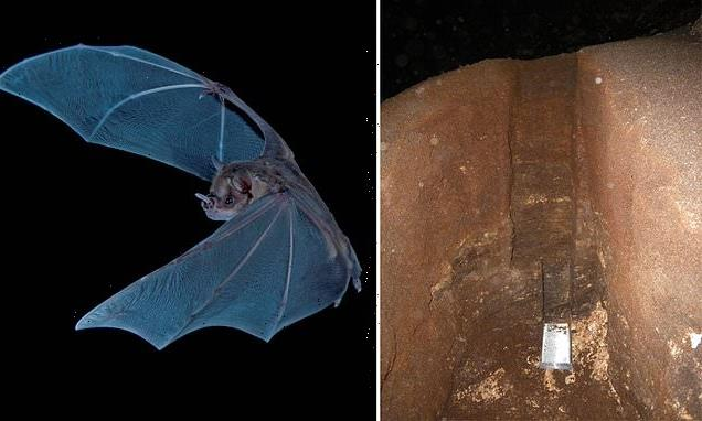 Scientists dig into 4,300-year-old mound of bat poop