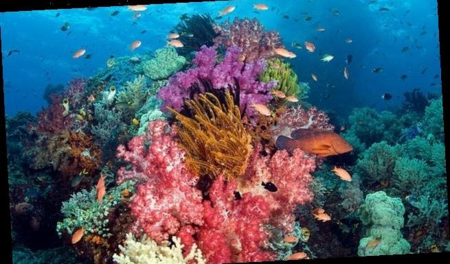 Mass exodus of ocean species from the tropics caused by climate change