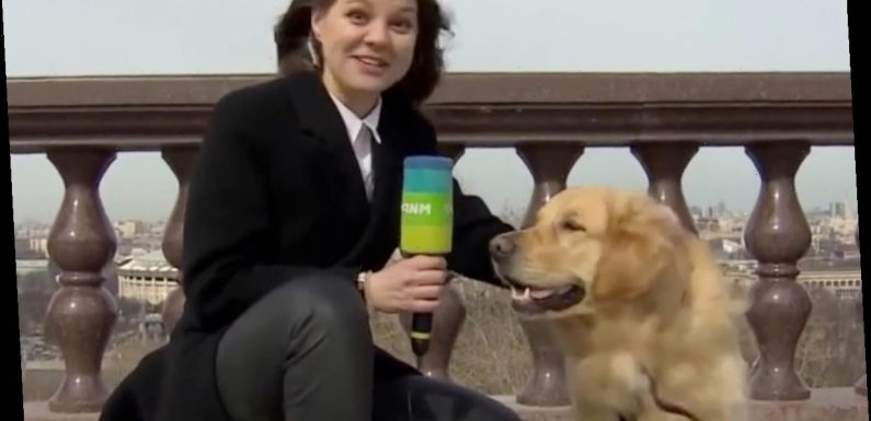 Moment dog grabs journalist's microphone during TV weather report and runs off
