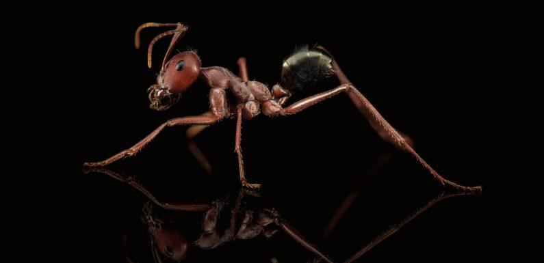 Let Us Now Praise Tiny Ants