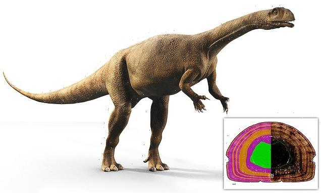 200 million-year-old South African dinosaur grew variably like a tree