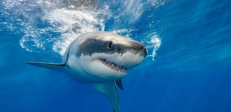 9 killed in 60 shark attacks worldwide in 2020 in deadliest frenzy for years