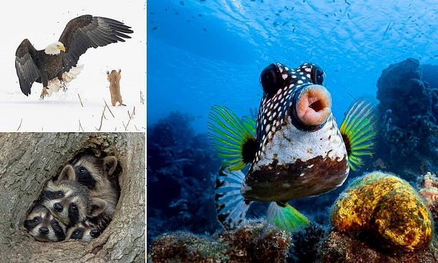 Best entries so far in the Comedy Wildlife Awards revealed