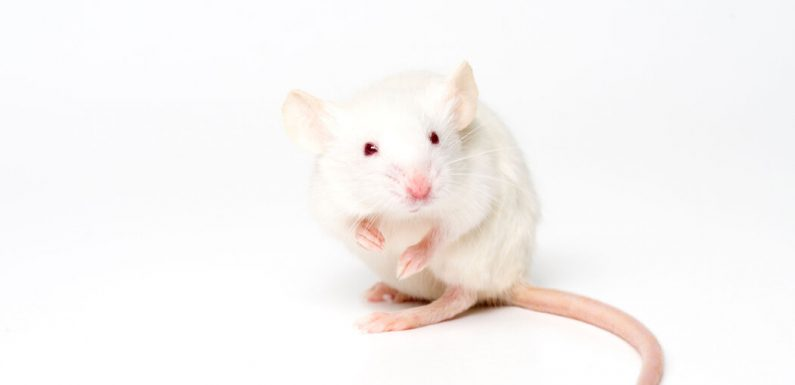 Breathing Through the Rectum Saves Oxygen-Starved Mice and Pigs