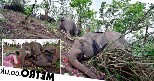 Entire herd of 18 elephants killed during lightning strike in India