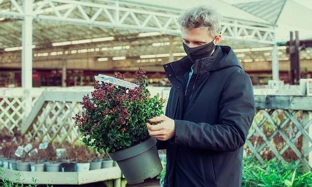 Experts urge plant buyers to use 'reputable British garden centres'