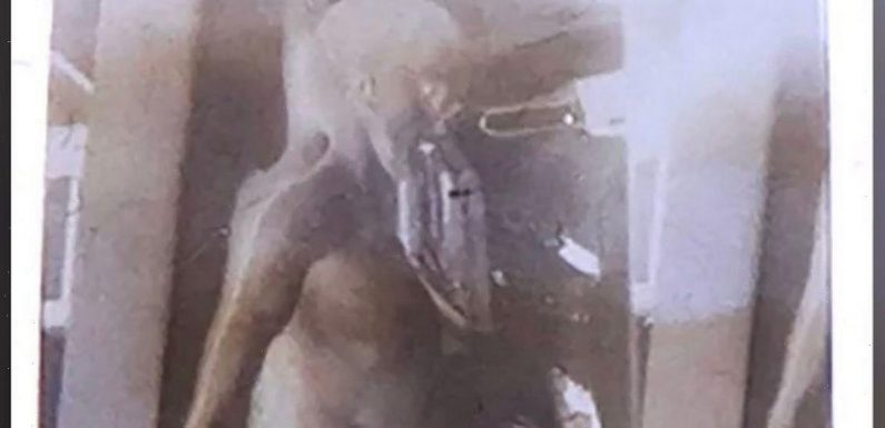 Famous picture of 'alien body' from top-secret film auctioned for £700k