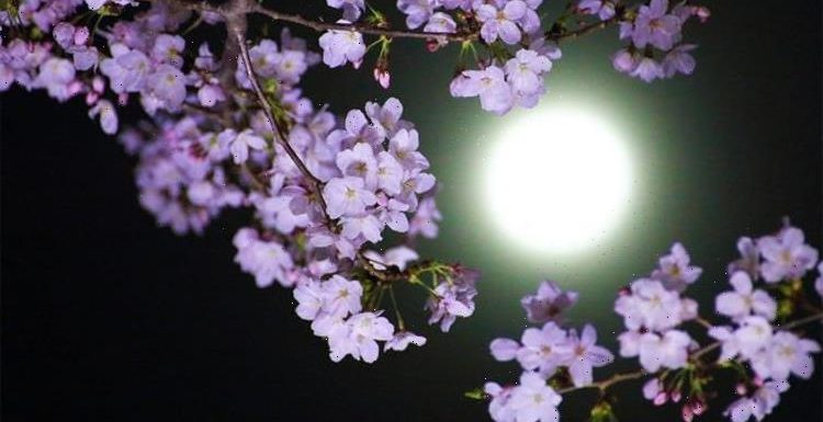 Flower Moon meaning: What is the meaning behind the May Flower Moon's name?