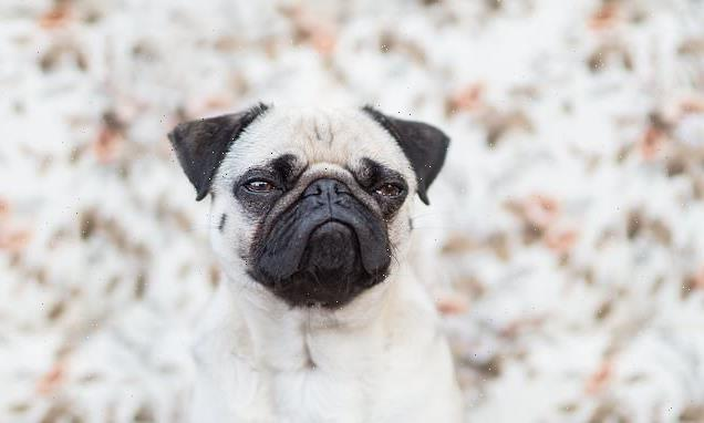 Grumpy dogs learn skills better from a stranger than friendly peers