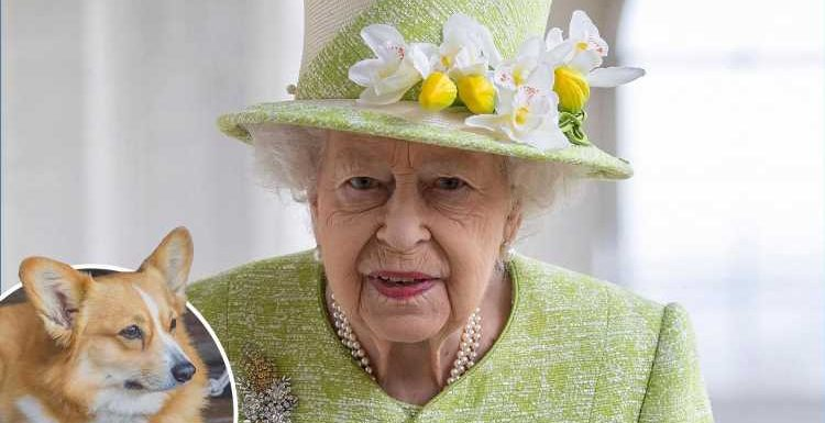 Queen suffers fresh heartache after death of new dorgi puppy Fergus given to her when Prince Philip fell ill