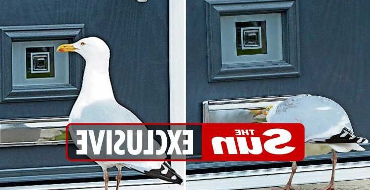 Salesman 'shattered' after seagull wakes him up at 5am every day by bashing on his new front door