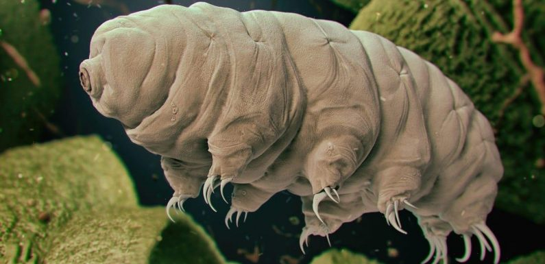 Scientists shot tardigrades out of a gun at more than 2,000 mph to see if the critters could survive
