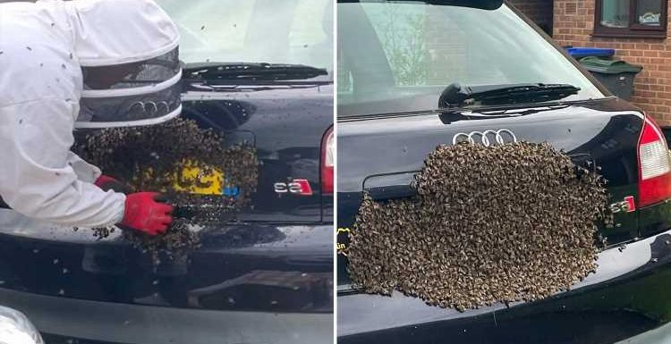 Swarm of 20,000 honey bees descend on car's number plate like a 'horror movie'