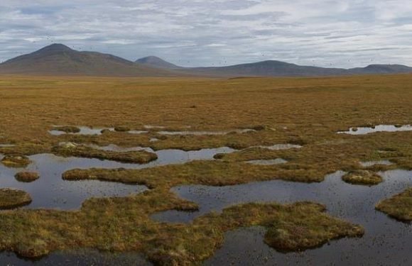 Wetland ecosystems are carbon storage 'power houses', expert says