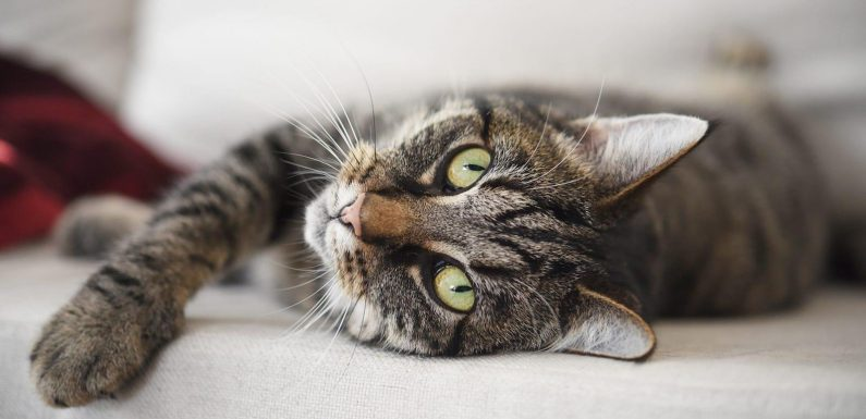 'We cremated someone else's cat': They thought their cat was dead. Then, it came home.