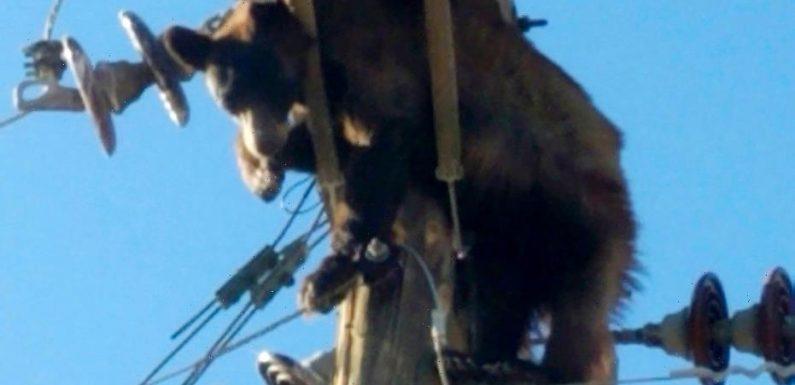 Bear gets stuck on Arizona utility pole, video shows